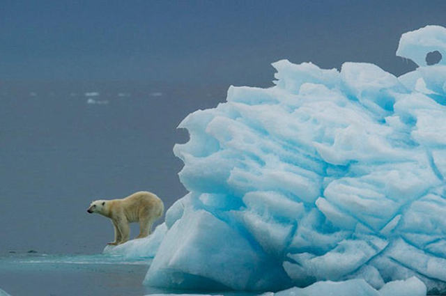 When polar bears outnumber humans, you know you're in for the experience of a lifetime. (CNN)