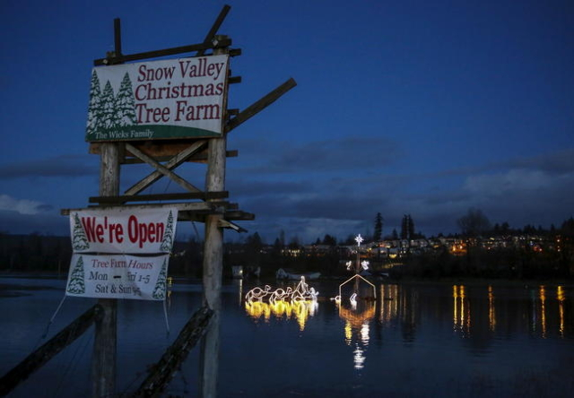 A Christmas-light nativity scene is pictured near a sign for the Snow Valley Christmas Tree Farm in the flood waters of the Snoqualmie River at NE Woodenville Duvall Road in Duvall, Washington Dec ...