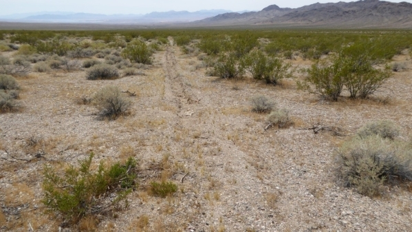 An unauthorized trench stretches into the distance in this photo taken May 10, 2015 at Gold Butte. Friends of Gold Butte, a preservation group,  released a report Wednesday documenting disturbance ...