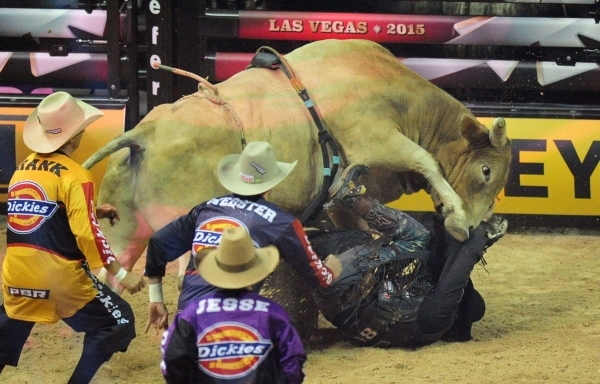 PBR bull rider Bonner Bolton his trampled by his bull after being bucked off during the first go-round of the PBR World Finals at the Thomas & Mack Center in Las Vegas Wednesday, Oct. 21, 2015 ...