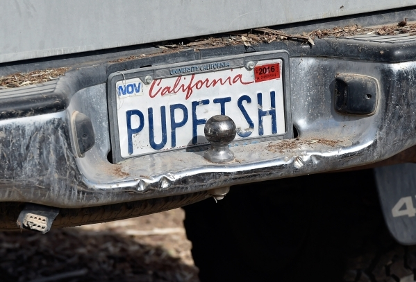 The license plate from Amargosa Conservancy truck displays its support of pupfish on the site that it is creating a new habitat for the now endangered Amargosa vole in Shoshone, Calif., on Tuesday ...