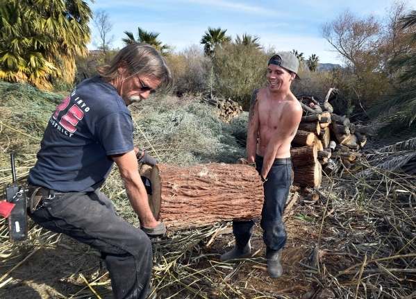 Workers Danny Macbrohn, left, and Chris Sellers carry a log to a nearby truck as the two and others with the Amargosa Conservancy create a habitat for the now endangered Amargosa vole in Shoshone, ...