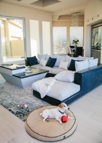 Brian Fettner's beloved Jack Russell Terrier, Maverick, enjoys the living room in the MacDonald Highlands custom home. ELKE COTE/REAL ESTATE MILLIONS