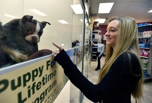 Emily Longsdorf admires some of the puppies at a Petland store Monday, Jan. 4, 2016, in Las Vegas. The City of Las Vegas will consider a possible ban on the retail sale of many cats and dogs durin ...