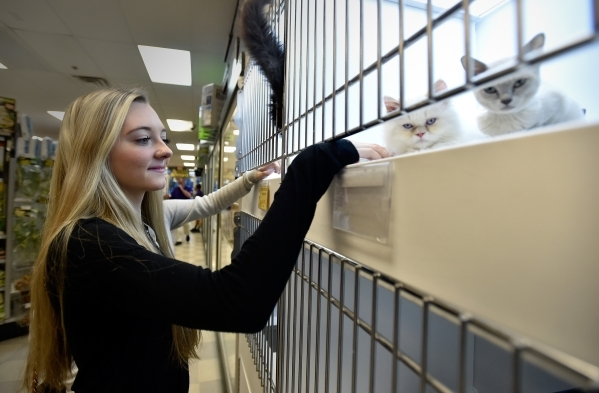 Emily Longsdorf admires some of the cats at a Petland store Monday, Jan. 4, 2016, in Las Vegas. The City of Las Vegas will consider a possible ban on the retail sale of many cats and dogs during W ...