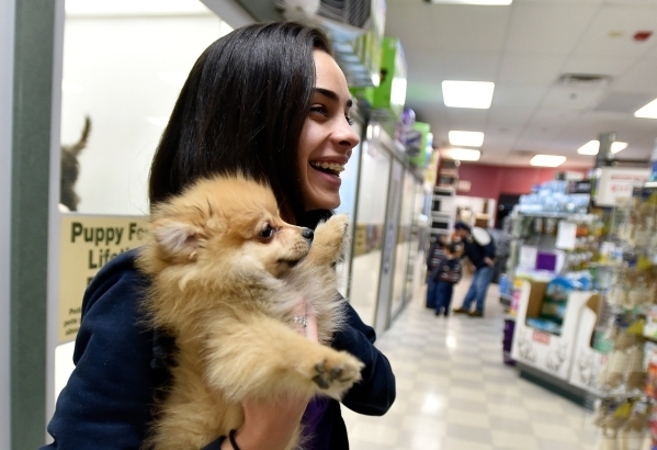 Pet counselor Vanessa West carries a Pomeranian puppy to a customer at a Petland store Monday, Jan. 4, 2016, in Las Vegas. The City of Las Vegas will consider a possible ban on the retail sale of  ...