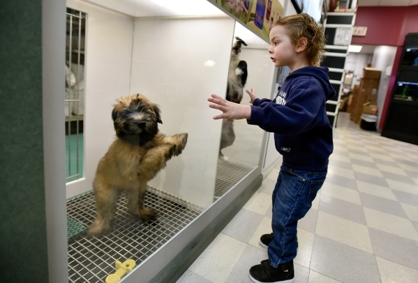 Cole Naples dances with a couple of puppies at a Petland store Monday, Jan. 4, 2016, in Las Vegas. The City of Las Vegas will consider a possible ban on the retail sale of many cats and dogs durin ...