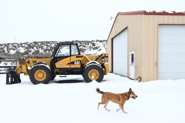 A dog belonging to an anti-government protestor walks around the Malheur National Wildlife Refuge headquarters, which the group is occupying, near Burns, Ore. on Tuesday, Jan. 5, 2016. The protest ...