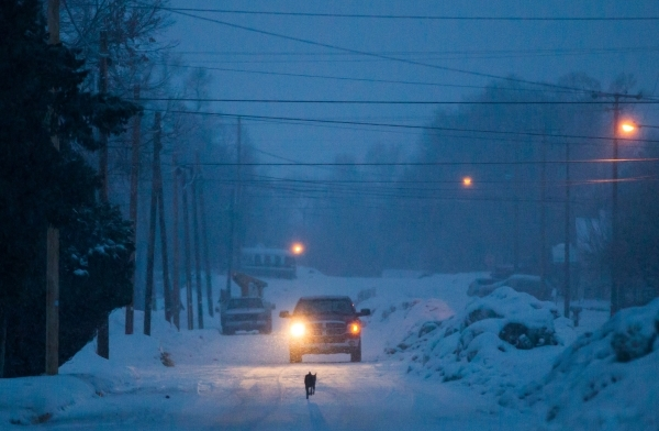 A dog runs down Adler Avenue in Burns, Ore. as snow falls on Tuesday, Jan. 5, 2016. Anti-government protestors have taken over the Malheur National Wildlife Refuge headquarters, about 30 miles sou ...