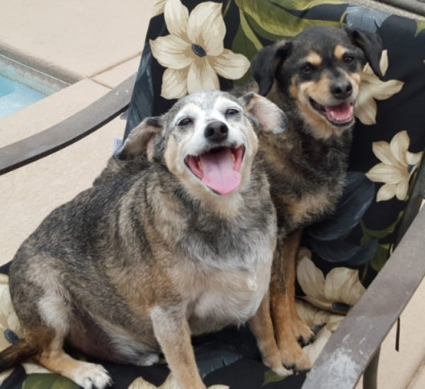 Hewey & Dewey, Kiss 4 Homeless Animals