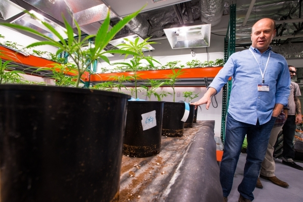 Nevada Organic Remedies CEO Andrew Jolley speaks during a tour of his company's marijuana production and grow facility in Las Vegas on Saturday, Jan. 16, 2016. The company also operates two  ...