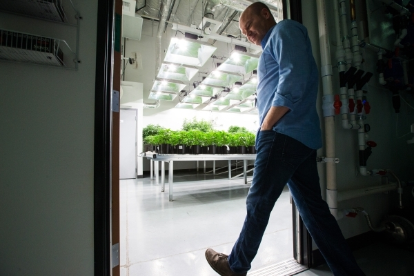 Nevada Organic Remedies CEO Andrew Jolley walks into a vegetation room during a tour of his company's marijuana production and grow facility in Las Vegas on Saturday, Jan. 16, 2016. The comp ...