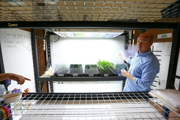 Nevada Organic Remedies CEO Andrew Jolley, right, shows off marijuana clone plants during a tour of his company's marijuana production and grow facility in Las Vegas on Saturday, Jan. 16, 20 ...