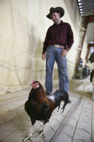 Paul Rogers, owner of Las Vegas' Paradise Ranch, poses with rescue rooster, Captain Hook, who lost his left eye as the result of being exploited as a fighting cock. Monday, June 1, 2015. (Ja ...