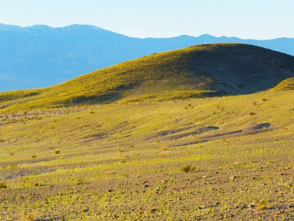 Desert gold paints a hillside yellow and green Wednesday near Ashford Mill in southern Death Valley National Park. Wildflowers are already in bloom in parts of the park 100 miles west of Las Vegas ...