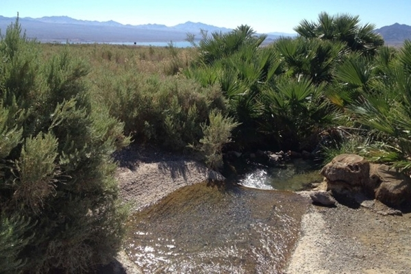Rogers Spring, located a few miles north of the Echo Bay turnoff along Northshore Road, features palm trees and a natural spring where visitors can picnic while getting a scenic look at Lake Mead. ...