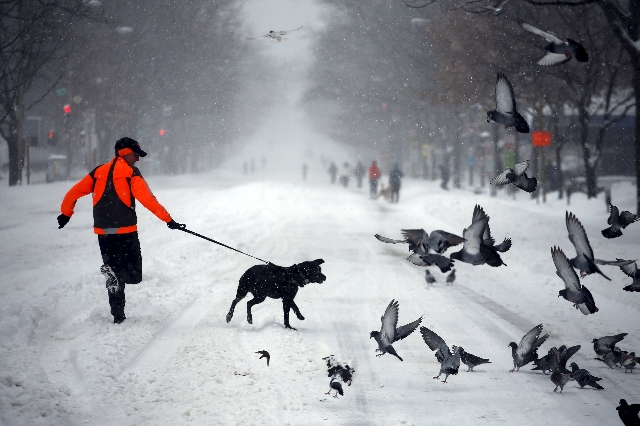A man runs with his dog along a street covered by snow during a winter storm in Washington January 23, 2016. A winter storm dumped nearly 2 feet (58 cm) of snow on the suburbs of Washington, D.C., ...