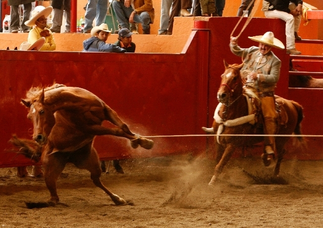 A horse struggles as he is caught from his front legs during the Third State Charro Championship in Mexico City in this Jan. 27, 2007 file photo.