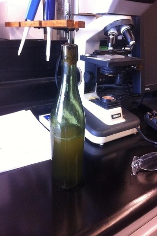 A scuba diver, a researcher and a beer enthusiast walked into a lab and uncorked the mystery of an antique bottle of beer. Jon Crouse, an amateur scuba diver and treasure hunter from Nova Scotia,  ...