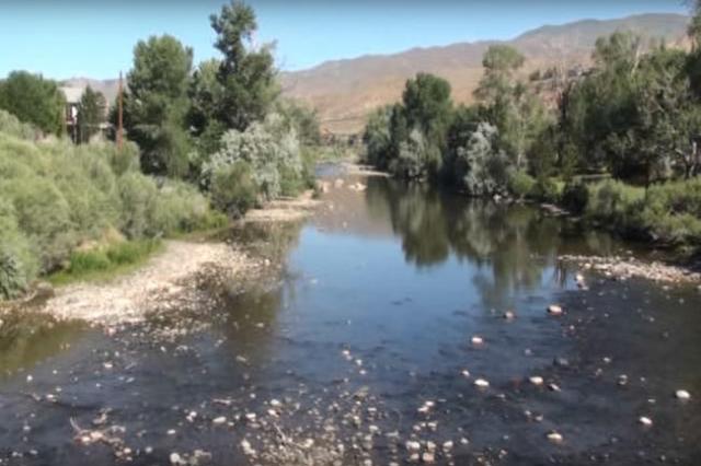 Truckee River (Nevada Department of Wildlife/YouTube)