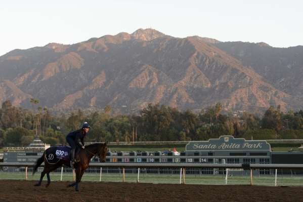 Ageless runs during morning workouts to prepare for the 31st Breeders Cup World Championships at Santa Anita Park. (Kelvin Kuo/USA Today Sports)