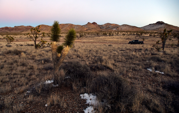 A truck passes through a grassy area in the high desert area of the Castle Mountains Monday, Feb. 1, 2016. A 29,000 acre parcel southwest of Searchlight in California is proposed as a national mon ...