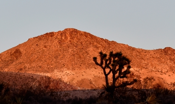 A Joshua tree is silhouetted against a glowing hilltop near New Castle Gold's mine in the high desert area of the Castle Mountains Monday, Feb. 1, 2016. A 29,000 acre parcel southwest of Sea ...