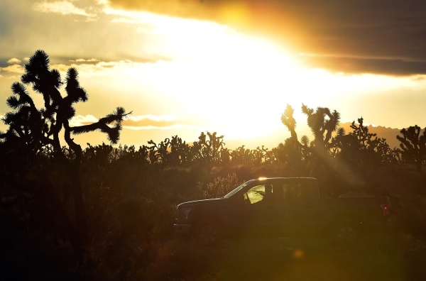 Director David Lamfrom of the California Desert and National Wildlife drives his truck through a Joshua tree forest as he tours the high desert area of the Castle Mountains Monday, Feb. 1, 2016. A ...