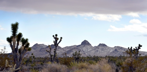 The peaks of the Castle Mountains are seen in the distance Monday, Feb. 1, 2016. A 29,000 acre parcel southwest of Searchlight in California is proposed as a national monument to protect an area l ...