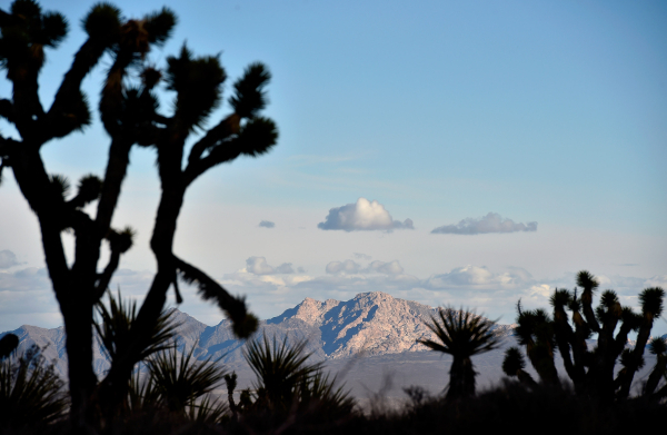 Spirit Mountain is seen in the distance from an area near the Castle Mountains Monday, Feb. 1, 2016. The mountain, a monolith of white granite is an important site for native peoples of the Mojave ...