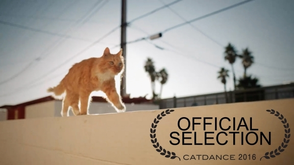 """One of Las Vegas entertainer Gregory Popovich's cats joined him in the award-winning film short """"Purfect Patsy."""" (Courtesy)"""