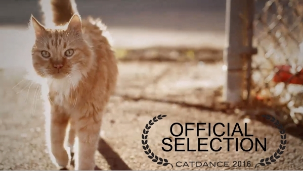 The coveted Gold Litter Scoop was awarded to filmmaker Mike Thompson at the Catdance Film Festival presented by new Fresh Step¬Æ with the power of FebrezeþÑ¢ Saturday, Jan. 23, 2016 ...