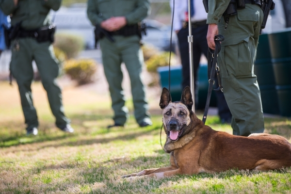 K9 officer Nicky, who was attacked by a suspect with a machete on Friday, sits in the grass as Las Vegas police Sgt. Eric Kerns speaks with reporters at South Central Area Command in Las Vegas on  ...