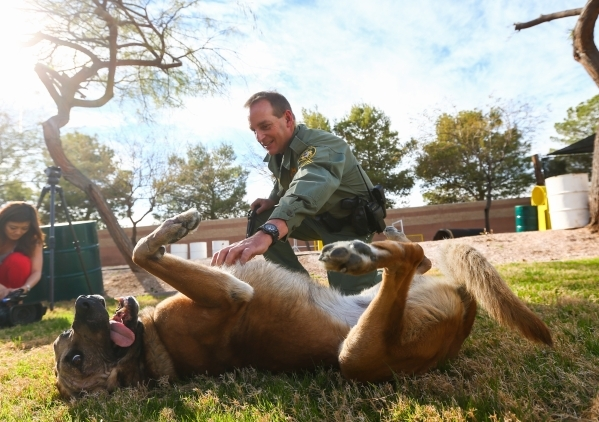 Las Vegas police Sgt. Eric Kerns pets his partner, K9 officer Nicky, who was attacked by a suspect with a machete on Friday, at South Central Area Command in Las Vegas on Wednesday, Feb. 17, 2016. ...