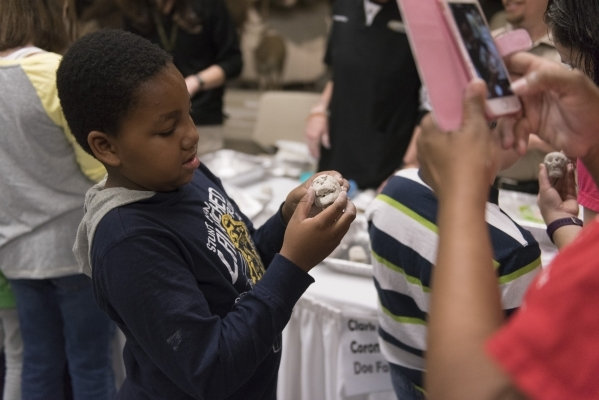 """Neo Sathakge, 8, spreads clay across a miniature skull model to reveal facial characteristics during the Forensics Day """"CSI-Mini-Camp"""" at the Las Vegas Natural History Museum in Las Vega ..."""