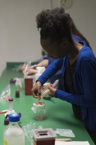 """Marlissa Collins, forensic scientist with the Las Vegas Metro Police Department, extracts DNA from a strawberry during the Forensics Day """"DNA Workshop"""" at the Las Vegas Natural History M ..."""