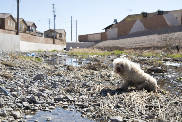 A stray dog sits in a drainage ditch in a neighborhood that has seen a dramatic rise in poverty near Nellis and Las Vegas boulevards on Thursday, Feb. 25, 2016. Daniel Clark/Las Vegas Review-Journ ...