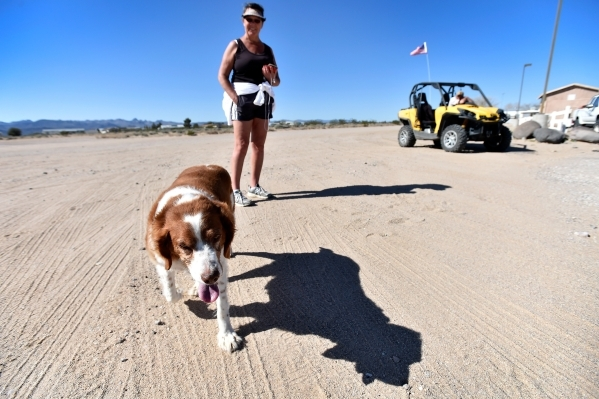 Laurie Fowler watches her Brittany named Bebe, as they walk along a dirt road on Thursday, Feb. 25, 2016, in Cal-Nev-Ari. Fowler, along with her husband, Jon, spend winters in the small community  ...