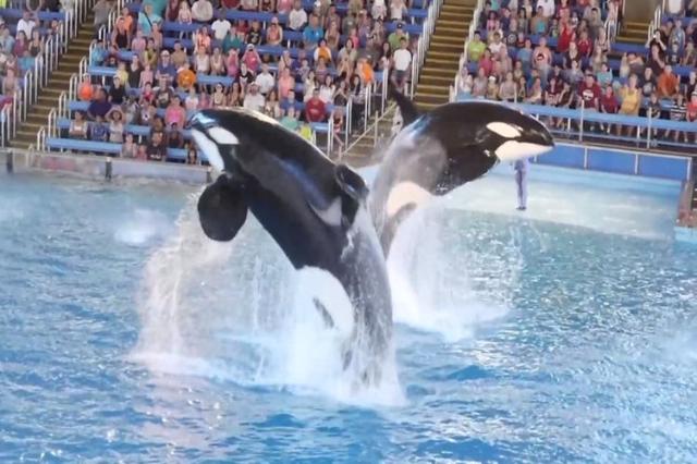 Vegas Whales