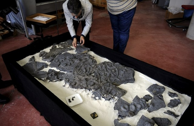 A fossil of a Ichthyosaur is seen at the Jurassic Museum of Asturia in Colunga, northern Spain, Nov. 6, 2015. Scientists on Tuesday released research which attributed the ichthyosaurs extinction 9 ...