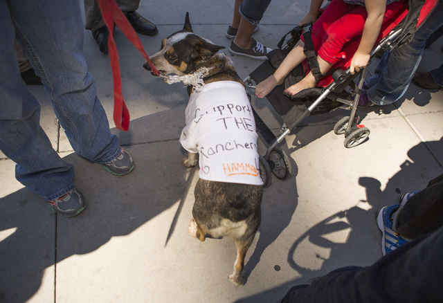 Wrangler the dog stands around other supporters of  Cliven Bundy in front of Lloyd George United States Courthouse on Thursday, March 10, 2016.Jeff Scheid/Las Vegas Review-Journal Follow @jlscheid