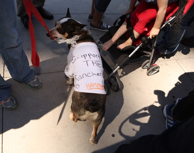 Wrangler the dog at rally outside the Lloyd George Federal Building on Thursday, March 10, 2016, in Las Vegas. (Jeff Scheid/Las Vegas Review-Journal)
