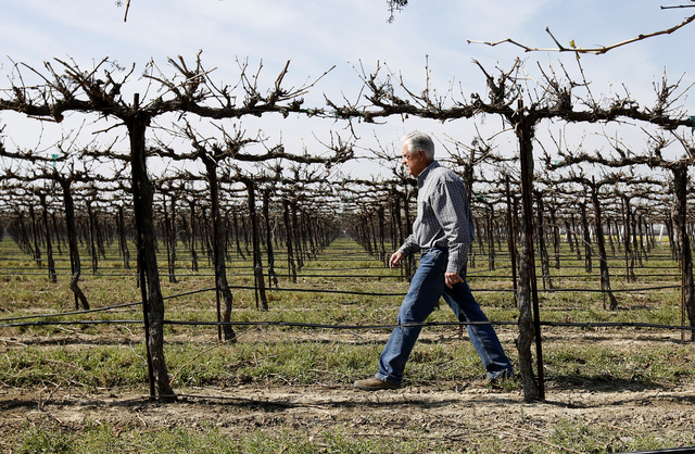Mike Stearns, chairman of the San Luis & Delta-Mendota Water Authority, walks through a grape field he manages near Firebaugh, Calif., on Feb. 25, 2016. (AP Photo/Rich Pedroncelli)