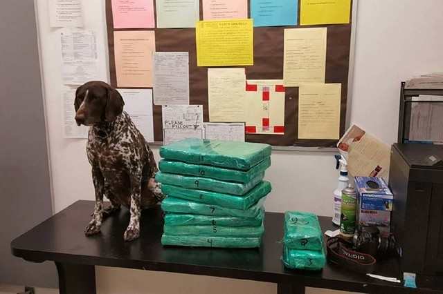 This undated photo released by the Los Angeles Airport Police shows multiple packages of cocaine wrapped in green cellophane that was apprehended at Los Angeles International Airport. A JetBlue fl ...