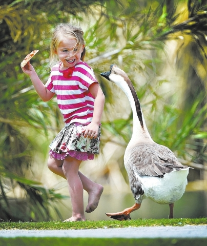 Jordyn Farnsworth smiles as she runs from a goose at Floyd Lamb Park at Tule Springs on Friday, June 5, 2015. The 680-acre park in the northwest valley, features wildlife, lush vegetation, lakes a ...