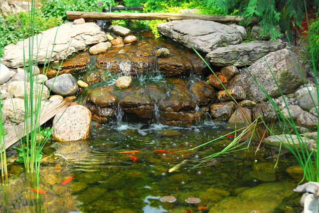 Create backyard retreat with a koi pond las vegas review for Koi carp pond depth