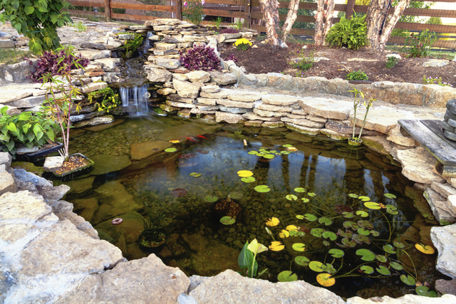 Create Backyard Retreat With A Koi Pond Las Vegas Review Journal