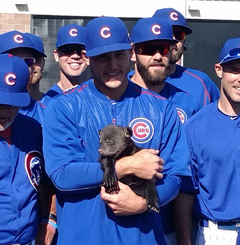 In this photo provided by Jason P. Skoda, Chicago Cubs' Anthony Rizzo holds one of two bear cubs during spring training baseball, Friday, March 25, 2016, in Mesa, Ariz. (Jason P. Skoda via AP)