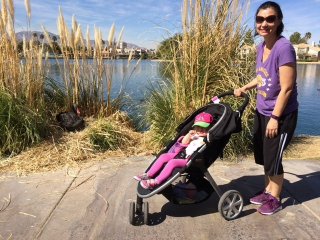 South Shores resident Kelle Clarke stops pushing her 2-year-old daughter, Lilly, in her stroller Feb. 26 to say hi to a swan keeping eggs warm at a nest on the shore of Lake Jacqueline in Desert S ...