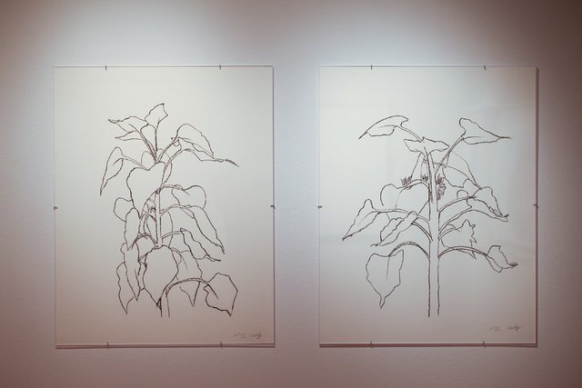"""""""Sunflower I"""" and """"Sunflower II"""" (both from 2004) are shown in the Ellsworth Kelly exhibition in the Barrick Museum at UNLV. Chase Stevens/Las Vegas Review-Journal Follow @csstevensphoto"""